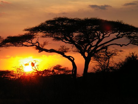 Sunset in Northern Tanzania by Alicia Davis