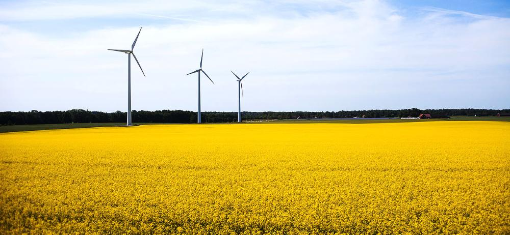Field of Yellow Flowers and Wind Turbines in Sweden by Yeun Yung Lee