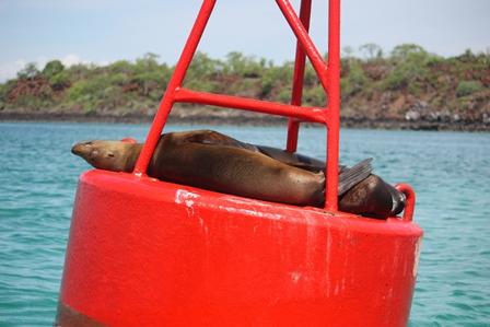 Lazy Seal by Kara Gordon