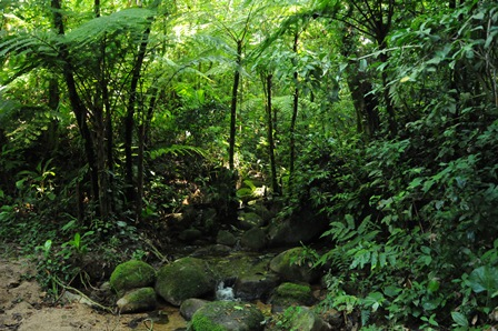 Atlantic Forest by Dr. Tim Kittel