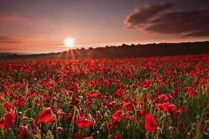 South Down Sunrise Rubies, England